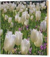 White Tulips In Bloom Wood Print