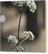 White Valerian Wood Print