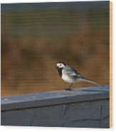 White Wagtail 1 Wood Print