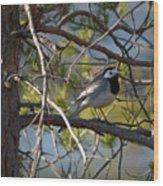 White Wagtail 2 Wood Print