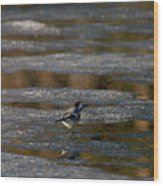 White Wagtail 4 Wood Print