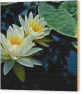 White Water Lilies Wood Print