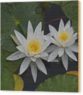 White Water Lilies Wood Print