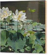 White Waterlilies Wood Print