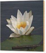 White Waterlily 1 Wood Print