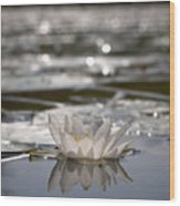 White Waterlily 3 Wood Print