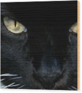 White Whiskers Wood Print
