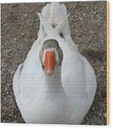 White Wild Duck Sitting On Gravel Wood Print