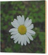 White Wild Flower  Wood Print