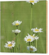 White Wild Flowers Nature Spring Scene Wood Print