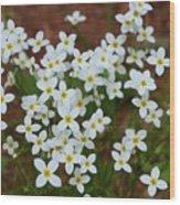 White Wildflowers Wood Print