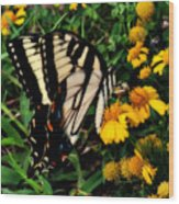 White Wing Butterfly Wood Print