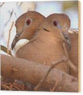 White-winged Doves In Lovebird Pose Wood Print