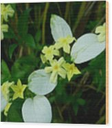 White Wings 4 Wood Print