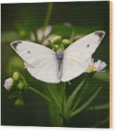 White Wings Of Wonder Wood Print