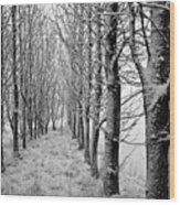 White Winter Pathway Wood Print