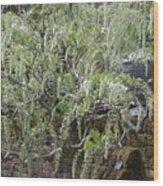 White Wisteria, Sissinghurst Wood Print