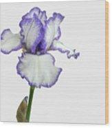White With Purple Trim Bearded Iris  Wood Print