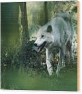 White Wolf Walking In Forest Wood Print