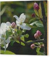 White Woodland Crabapple Flowers Wood Print