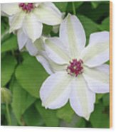 White, Yellow, And Purple Clematis Blossom Wood Print