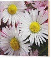 White Yellow Daisy Flowers Art Prints Pink Blossoms Wood Print