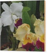 White Yellow Orchids Wood Print
