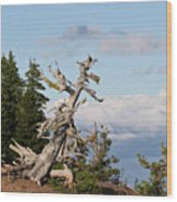 Whitebark Pine At Crater Lake's Rim - Oregon Wood Print by Christine Till