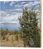 Whitebark Pine Trees Overlooking Crater Lake - Oregon Wood Print