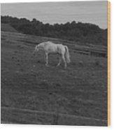 Whitehorse Wood Print