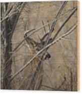 Whitetail Buck Square Wood Print