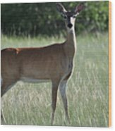 Whitetail Deer Wood Print