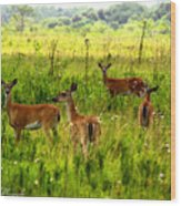 Whitetail Deer Family Wood Print