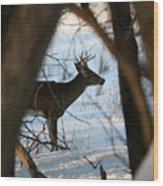 Whitetail Deer Threw The Trees Wood Print