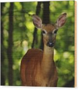 Whitetail Doe Wood Print