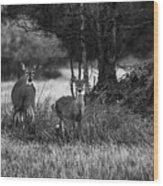 Whitetailed Deers Wood Print