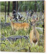 Whitetails Wood Print