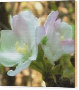 Who Here Has Seen Apple Blossoms In Late Summer Wood Print