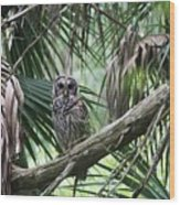 Whoooo Are You Wood Print by April Wietrecki Green