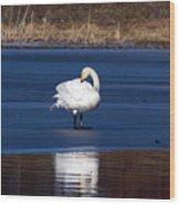 Whooper Swan 2 Wood Print