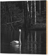 Whooper Swan In Bw 1 Wood Print