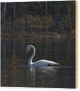 Whooper Swan Of Liesilampi 5 Wood Print