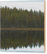 Whooper Swans Panorama  Wood Print
