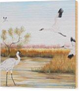 Whooping Cranes-jp3151 Wood Print