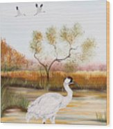 Whooping Cranes-jp3152 Wood Print