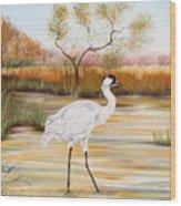 Whooping Cranes-jp3156 Wood Print