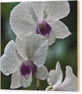 Whte Orchids Wood Print