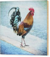 Why Did The Chicken... Wood Print