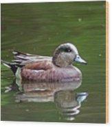 Widgeon Duck Wood Print