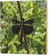 Widow Skimmer Dragonfly Female Wood Print